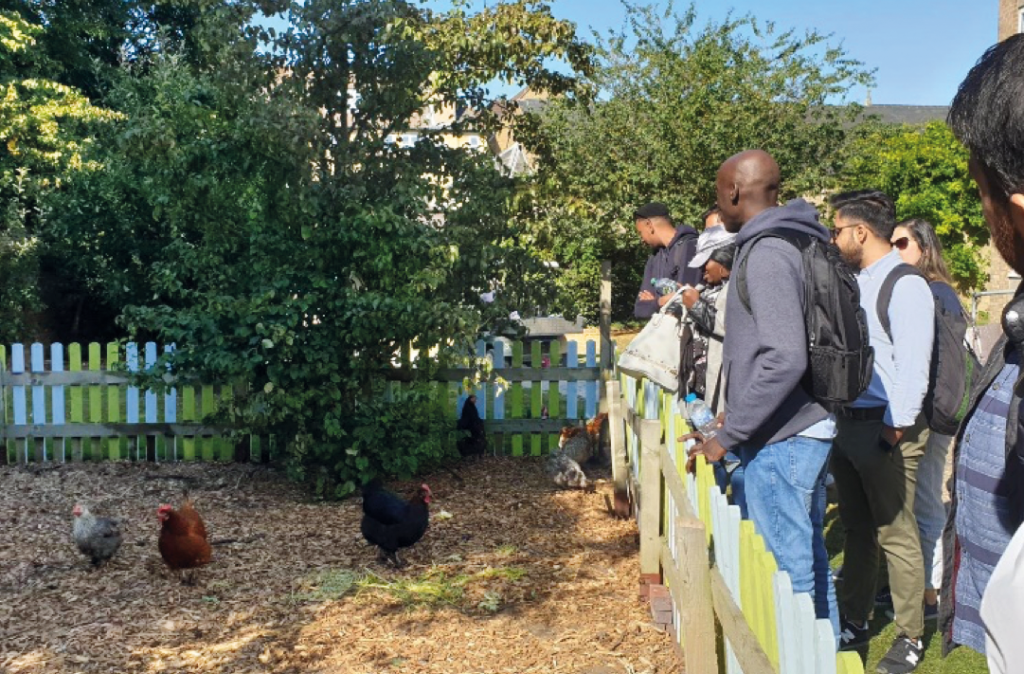 Group of students looking at chickens in a fenced area